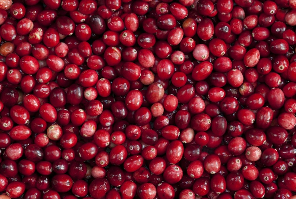 cranberry-bog.jpg