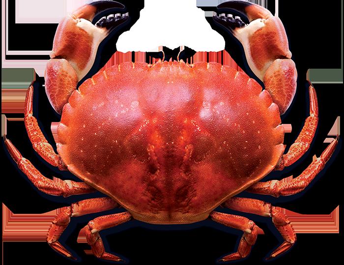 slider_image_crab_700_mob.png