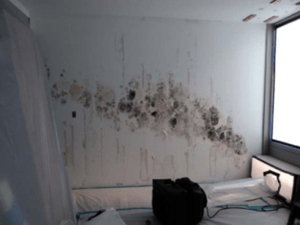 """Figure 1 :  Mold on drywall demising wall found after removal of VWC in this hotel room. The toilet exhaust from the bathroom to the left was drawing warm, humid outdoor air through the cavity spaces of the metal stud wall. The cold air from the PTAC unit, which was installed in the sleeve below the window to the right, cooled the moist air behind the VWC to the point of condensation. The condensation wetted the drywall and caused mold to grow in a """"plume"""" that matched the throw of cooled air from the PTAC unit."""