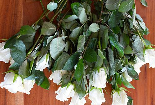 Blooms7.jpg