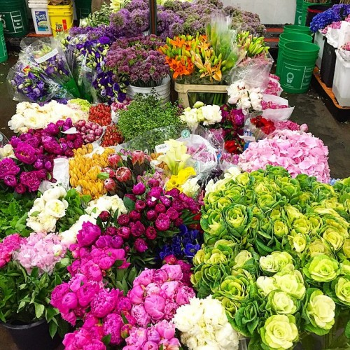 cold-storage-in-one-of-the-stores-on-28th-street-flower-market....-thinking-of-next-weeks-@momaps1-b-e1439927797503.jpg