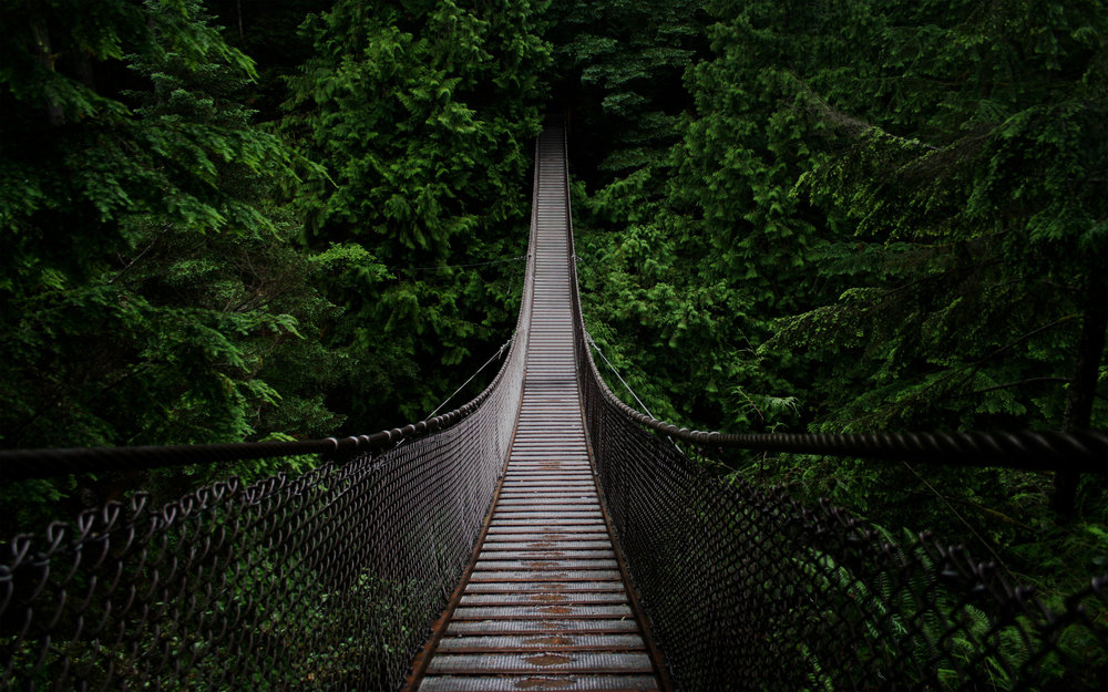 "<font size=""4"">CANOPY WALKS</font><strong>Bridge and walkways set high in the canopies.</strong><a> LEARN MORE →</a>"