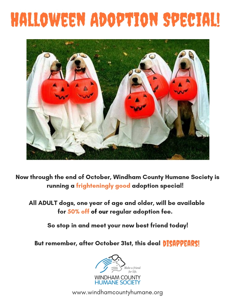 Halloween Adoption Special!.jpg