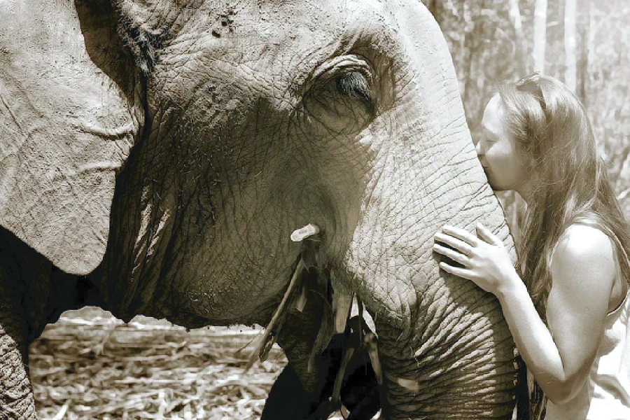 elephant-sanctuary-in-Chiang-Mai-01.jpg