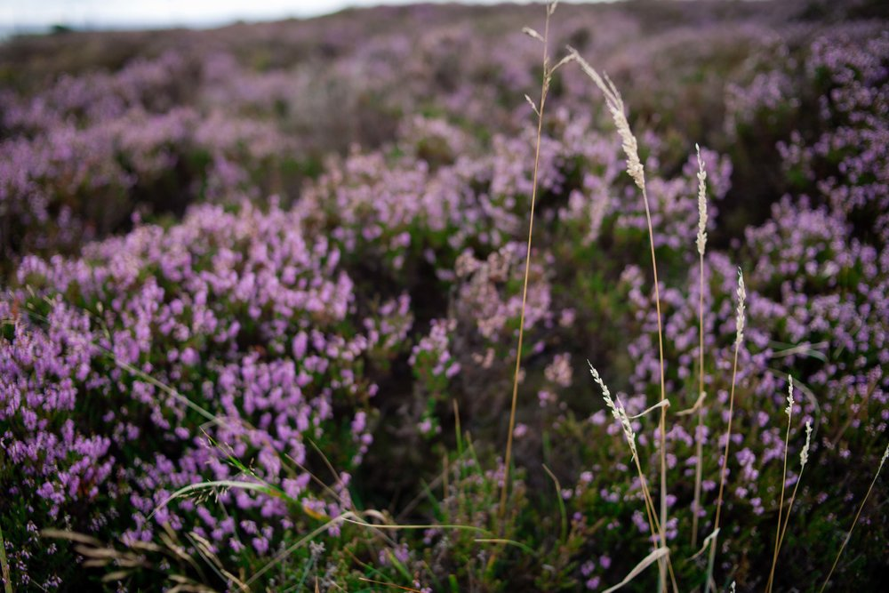 Pennine Manor Heather Fields