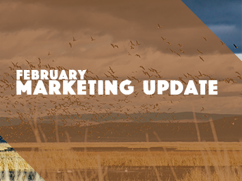 feb-marketing-update-thumb.jpg