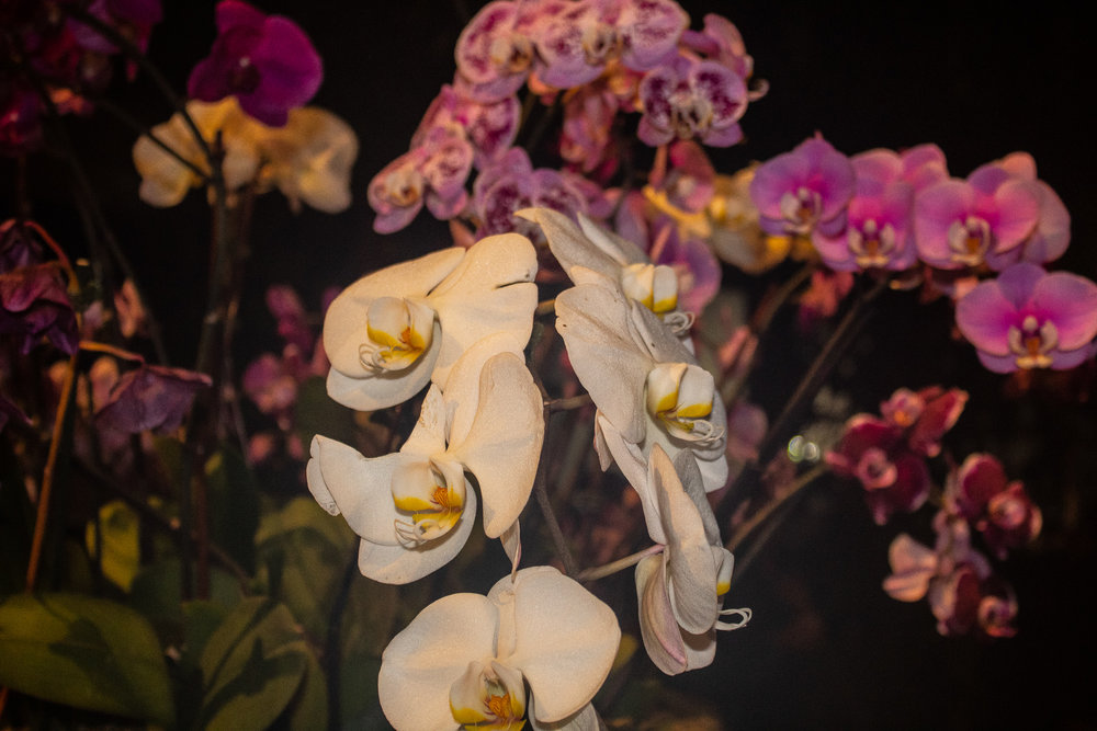 THE ORCHID SHOW: SINGAPORE.jpg