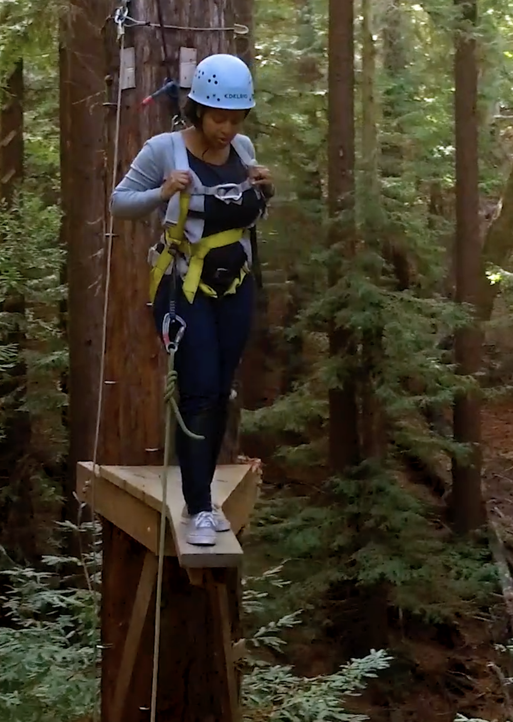 A woman does team building climbing in the redwoods
