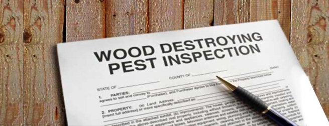 termite-damage-terminix-photo-1150x442.jpg