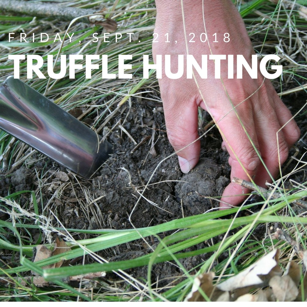 DAY 6 - Get your hands dirty as we forage for truffles with a Tuscan truffle picker and his dog, then learn how to cook with truffles in a hands-on cooking class.Enjoy a guided tour around Cortona, the most popular medieval village in Tuscany. Then you will have time to explore on your own.
