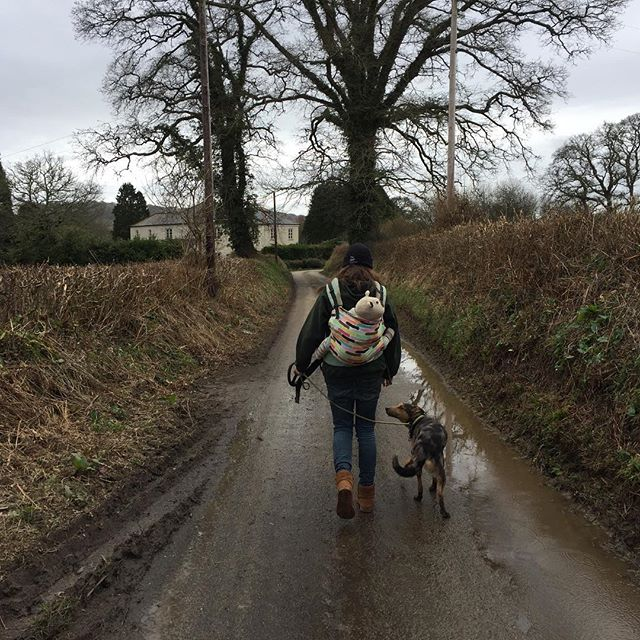 Kim (and Jasper) walking to the next village with Nala, working on speed and direction and distance work! She did a great job! #thewolfanddogdevelopmentcentre #shaunelljs #cornwall #dogbehavior #collie