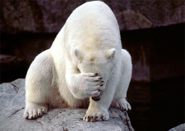 embarassment-aladdin-polar.jpg