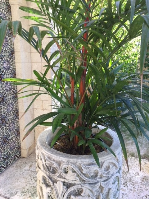 Rare and exotic palms and plants - At Bella Fortuna