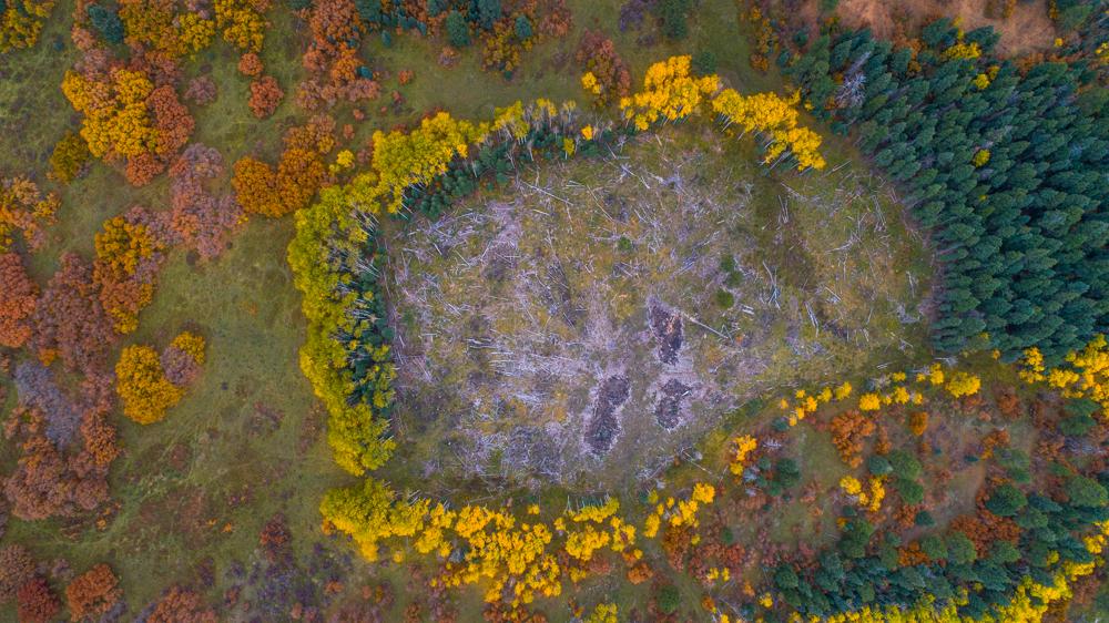 Pagosa foliage-0044.jpg