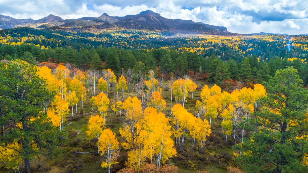 Pagosa foliage-0008.jpg