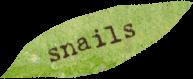 snails.png