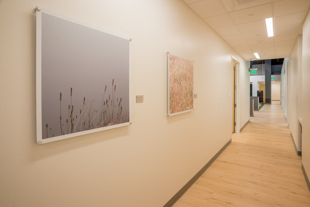 """River and Grass"" and ""Grass and Poppies""   Local photography on aluminum by Jesse Vasquez.  Kaiser Permanente Sports Medicine Center at the Golden 1 Center.  Sacramento, CA"