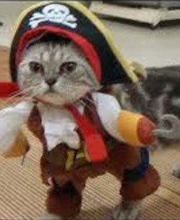 BLOG-CAT.jpg