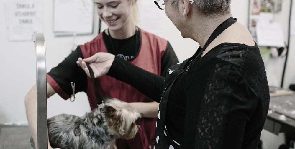 building-a-dog-grooming-career.jpg