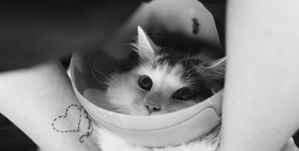 cat-grooming-school.jpg