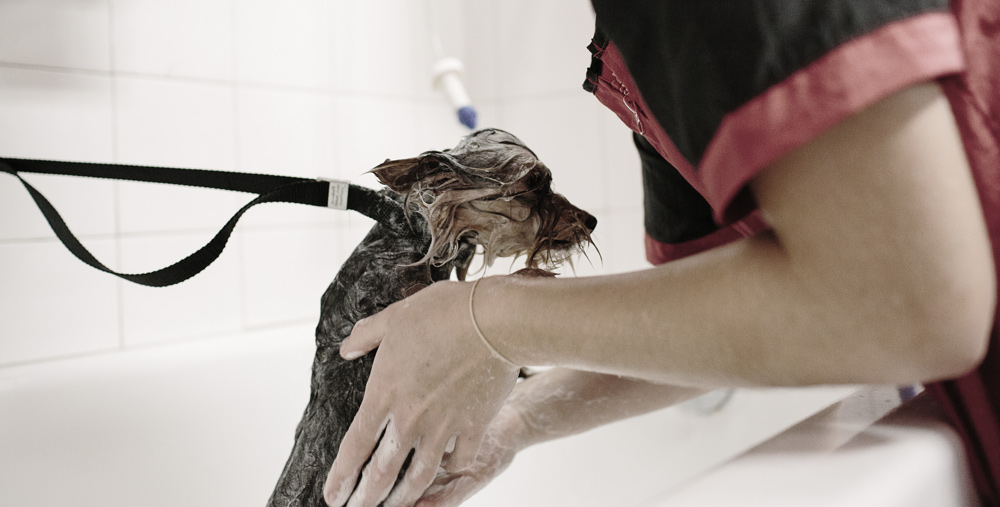 proper-dog-bathing-technique.jpg