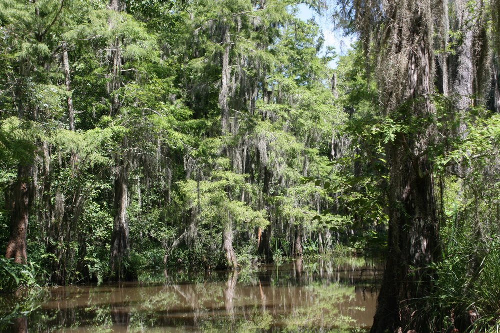 In college my family gifted me a bayou boat tour in the swamps of Louisiana. I'll never forget it!