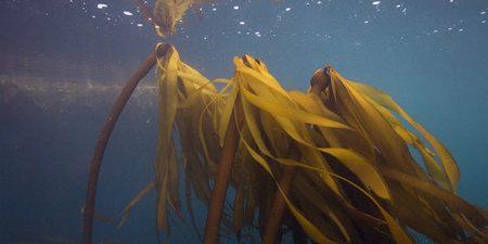 Fucus MAn - Wildcrafted seaweeds and herbshttp://www.ryandrum.com/