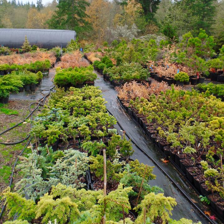 Nursery_crop.jpg