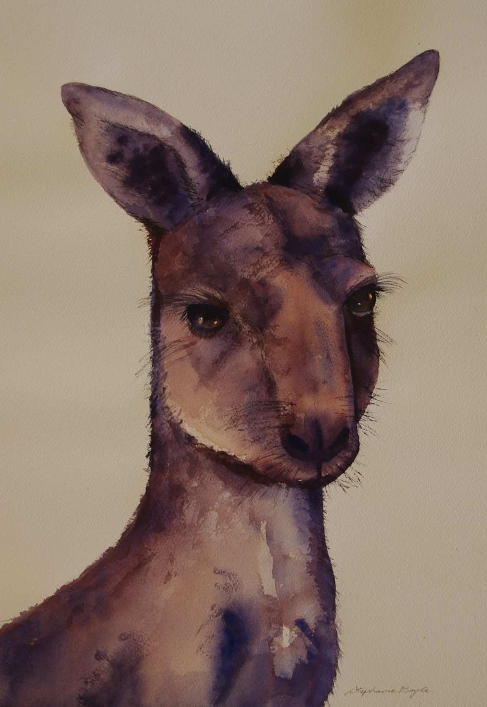 Kangaroo     36cm x 53 cm     Original Watercolour    Unframed     $250