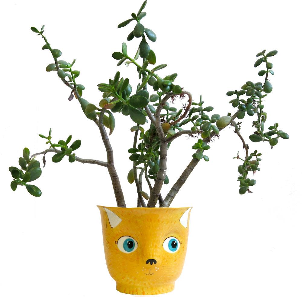 cat plant pot