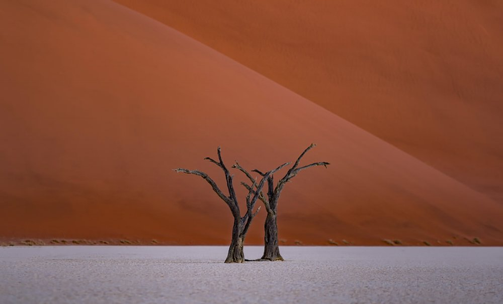 Namibia-Africa-Desert-Deadvlei-Tree-Landscape-Abstract