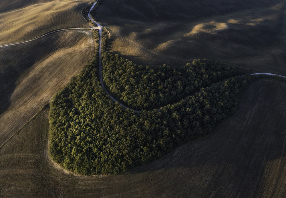 A smily forest located between Pienza San Quirico d'Orcia. Val d'Orcia