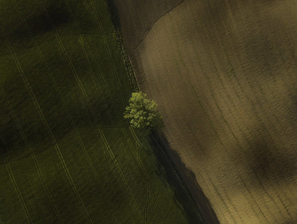 Eye bird view for a lonely tree around Pienza