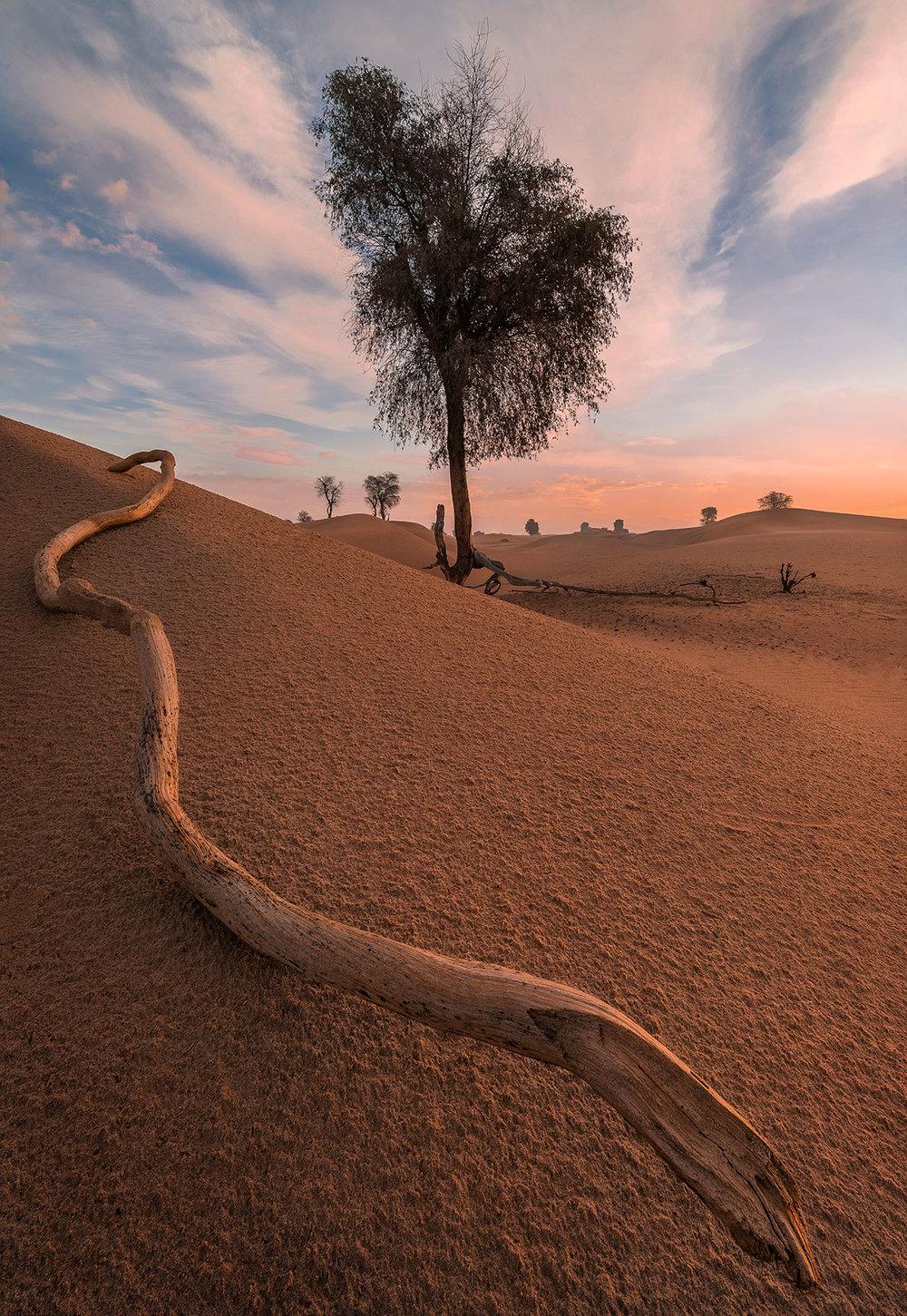 Tree at the Dubai desert