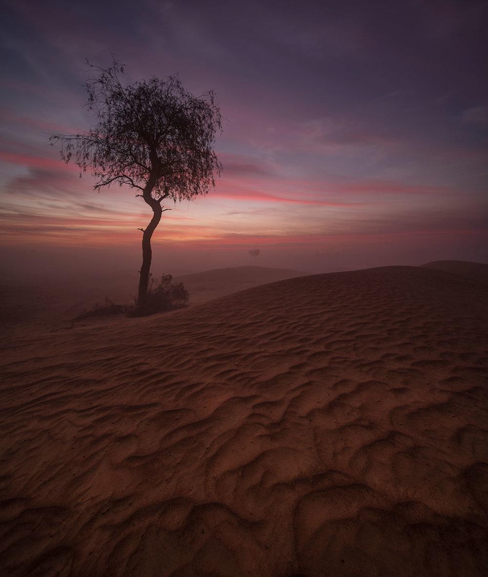 Maliha desert in Sharjah