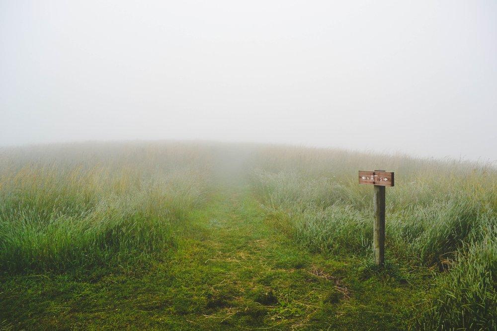 grass-1209945.jpg