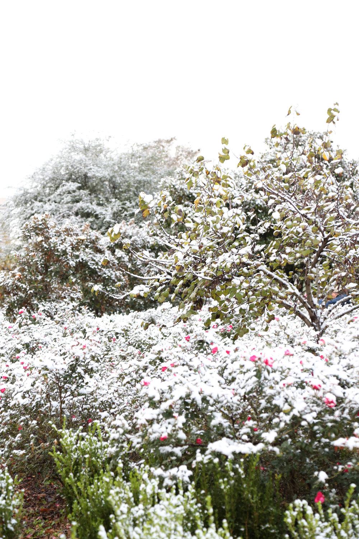 Snow 1 (1 of 1).jpg