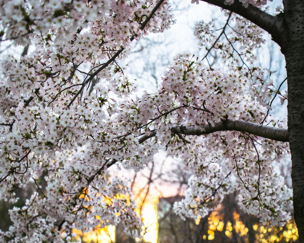 springtimelovliness copy.jpg
