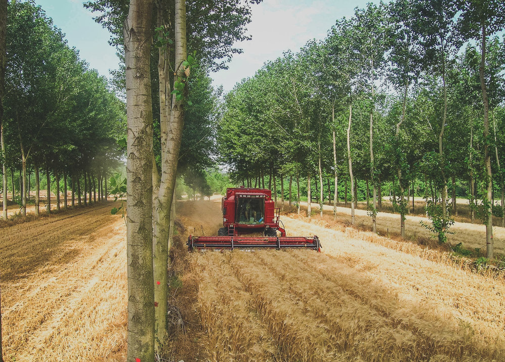 Agroforestry - An Introduction - Alley Cropping.jpg