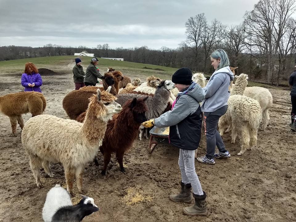 April 15, 2018 Alpacas of Troy visit - (check out the blog and Major Impact for further info)