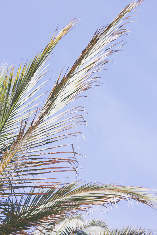 Fuerteventura, Canary Islands | www.hannahemilylane.com-2.jpg