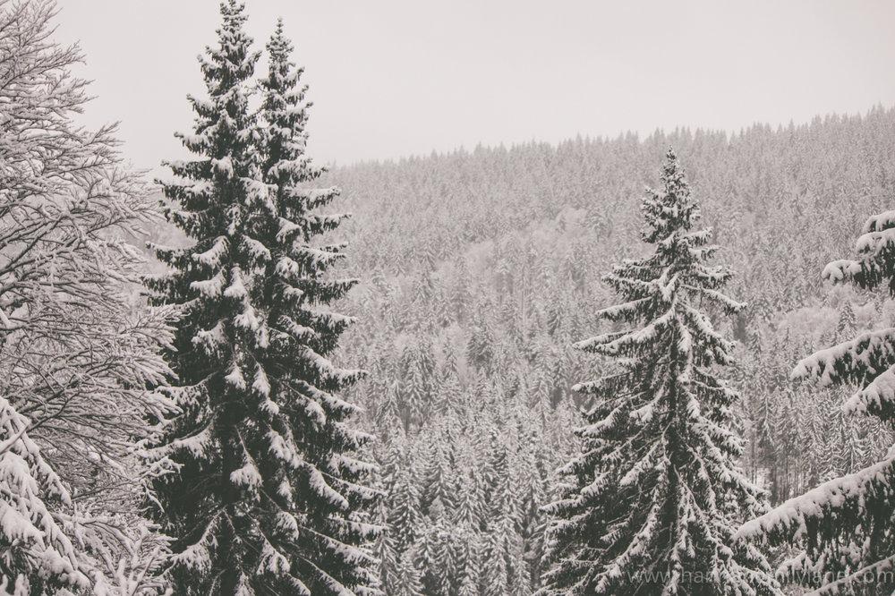 Black Forest, Germany | www.hannahemilylane.com