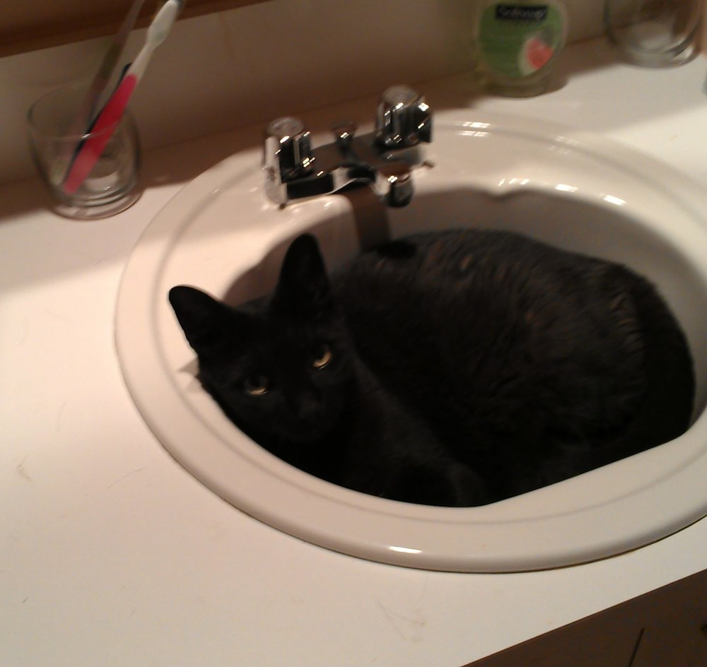 A cat in a bathroom sink. She would like some time and space and is ready for everyone to have left the room, thank you. Close the door behind you.