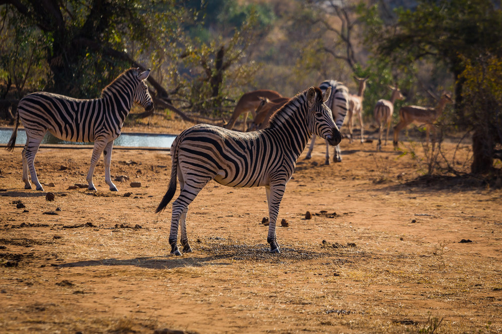 Kruger National Park World Challenge (9).jpg