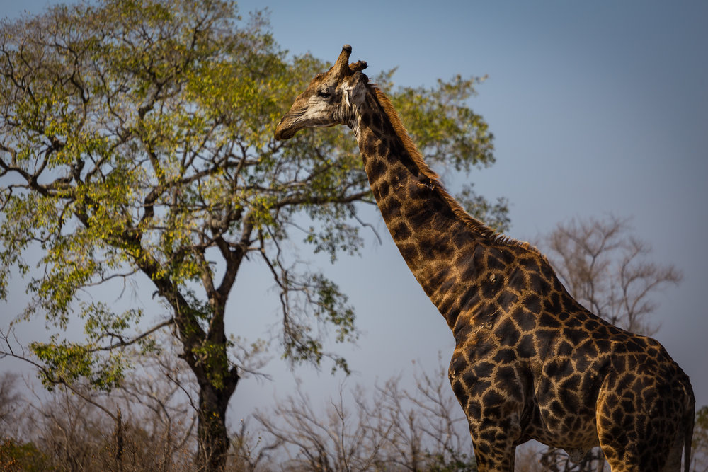 Kruger National Park World Challenge (16).jpg
