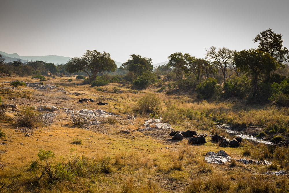 Kruger National Park World Challenge (24).jpg