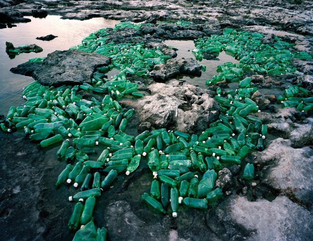 Algas-Algae-2013-1024x788.jpg