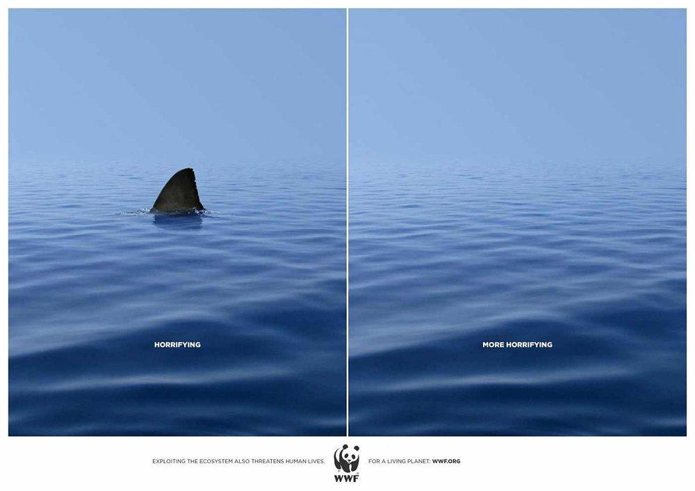 Environment 1.shark.jpg