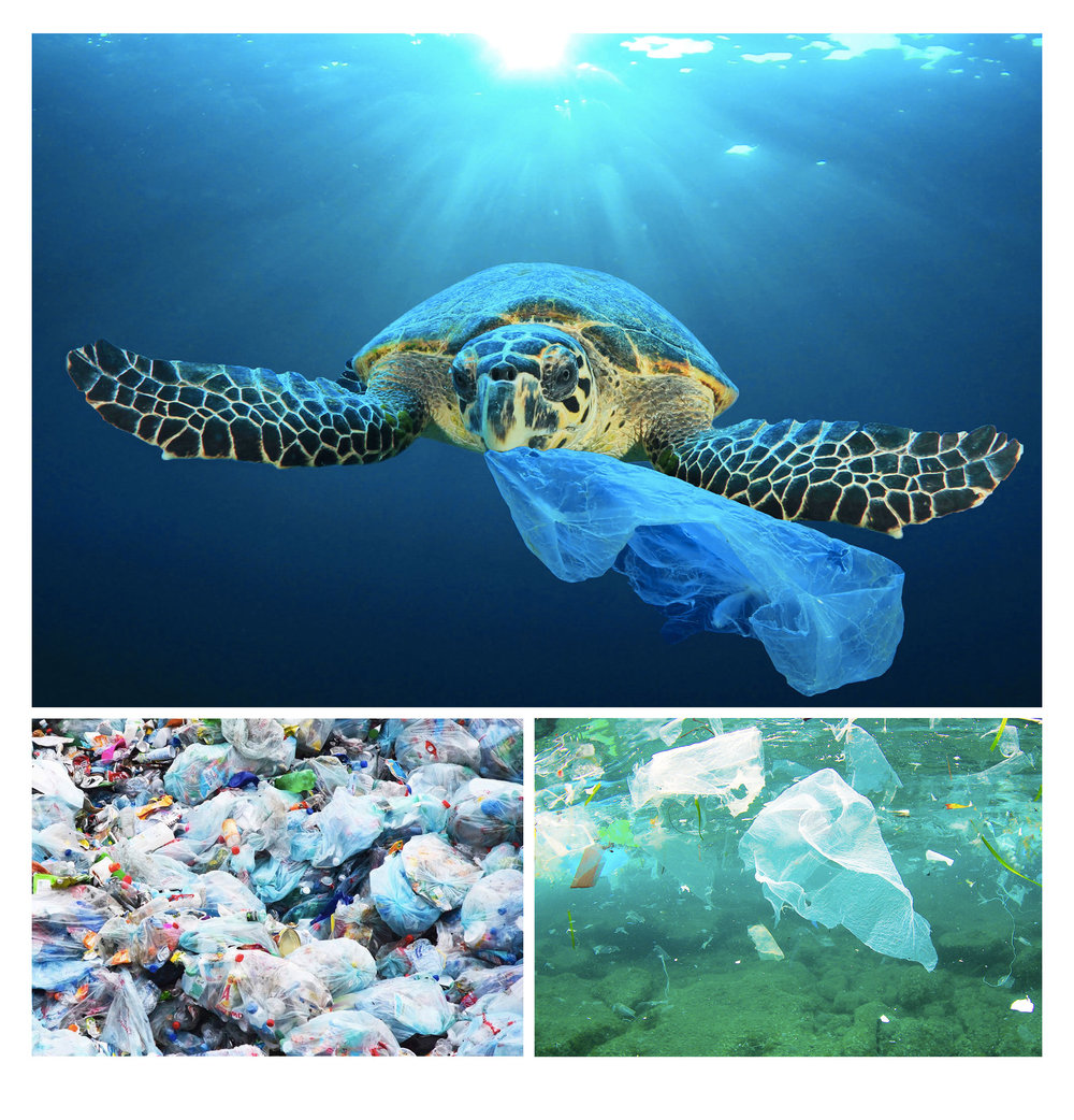 plastic_bag_pollution-3image.jpg