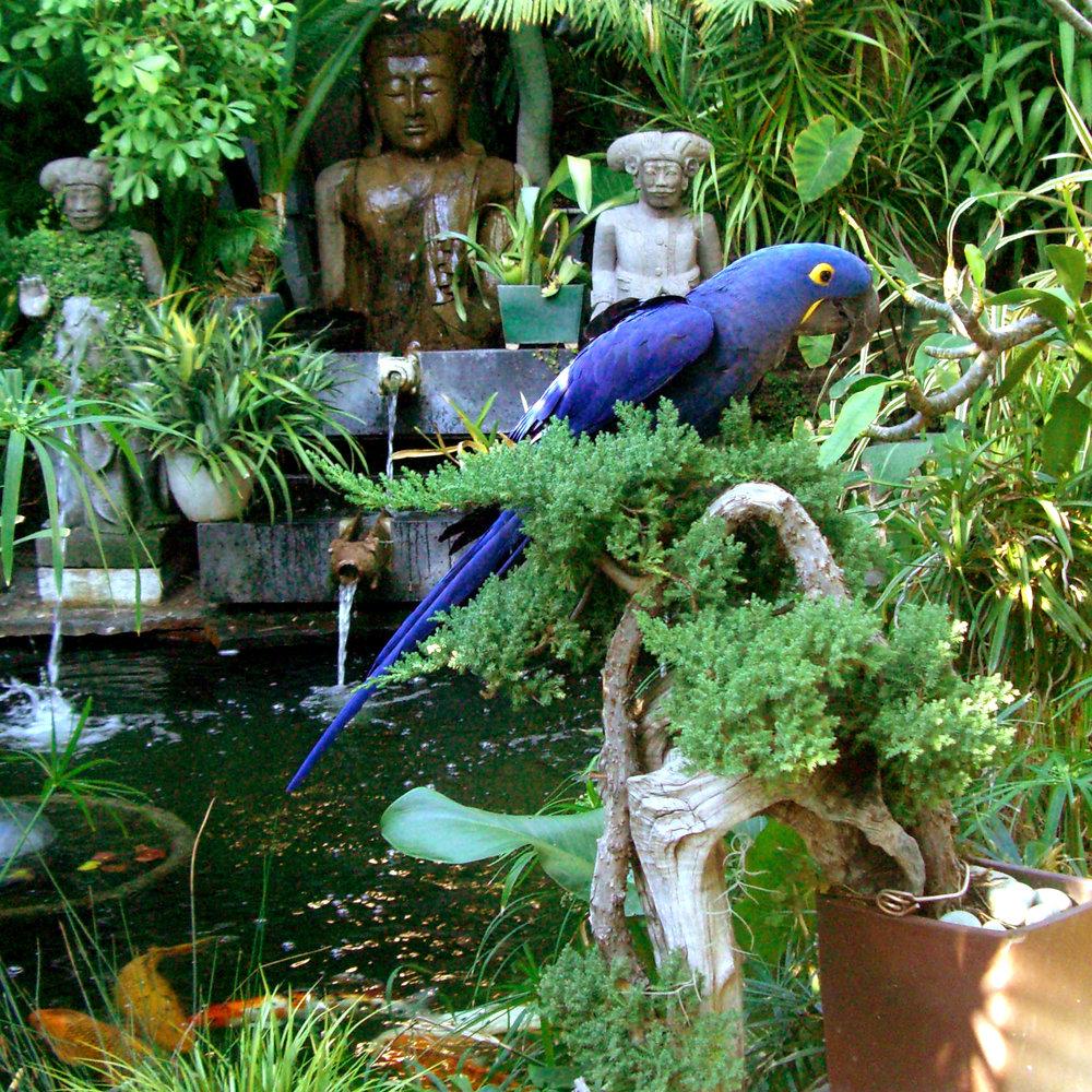 macaw_fish2.jpg